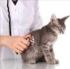 Ветеринарные клиники в Канадее